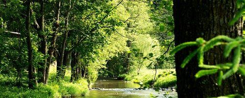 Údolí řeky Svratky – Telecí
